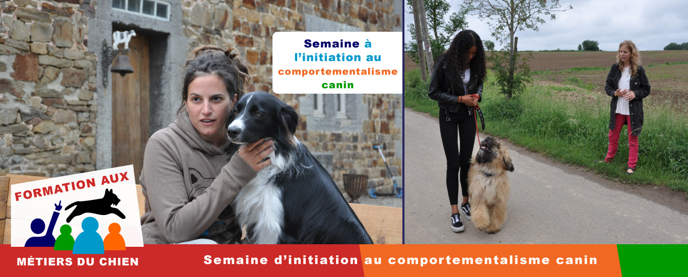 semaine de formation : initiation comportementalisme canin