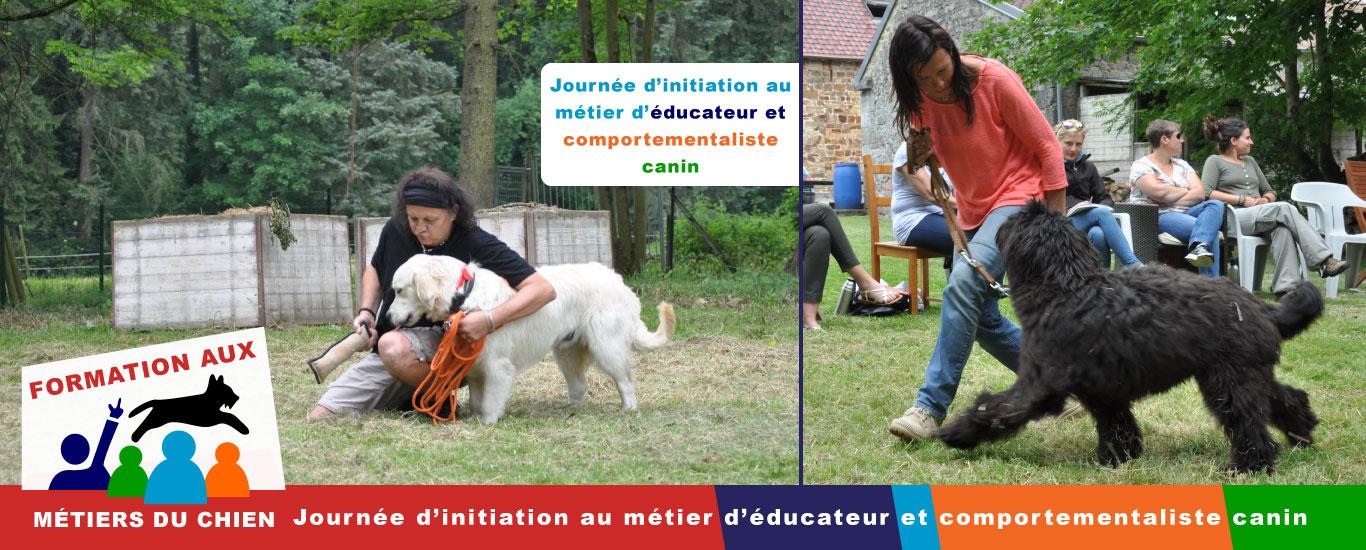 Formation aux métiers du chien dans la province de Namur